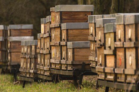FREE IMAGE: Honey bee boxes | Libreshot Public Domain Photos