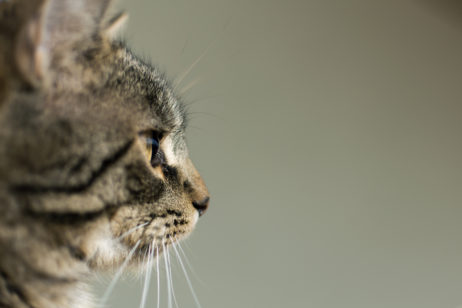 Free Image: Side View Portrait of Cat | Libreshot Free Stock Photos
