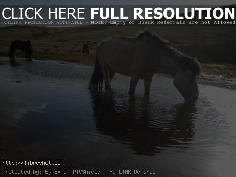 Drinking horse in Mongolia