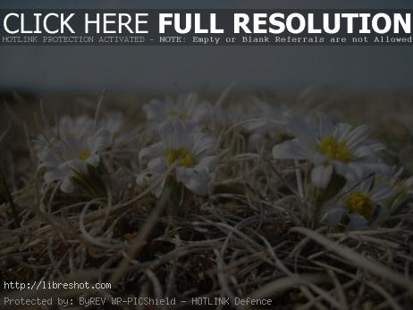 Flowers in Mongolian steppe