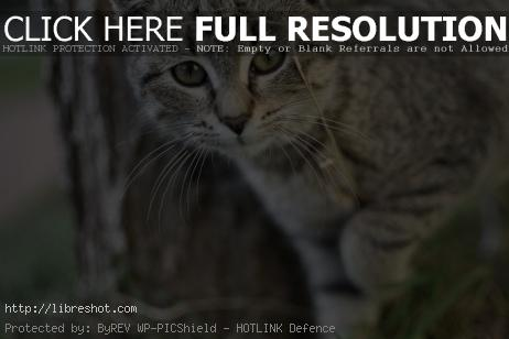 Curious Gray Cat | Free Images For Commercial Use