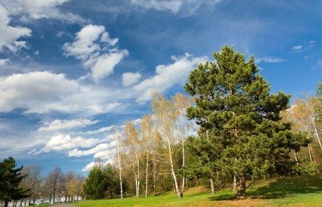FREE IMAGE: Landscape with trees | Libreshot Public Domain Photos