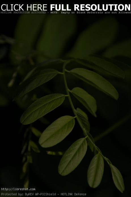 Free image of Art of the Nature – Green leaves