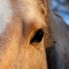 The Eye of a White Horse