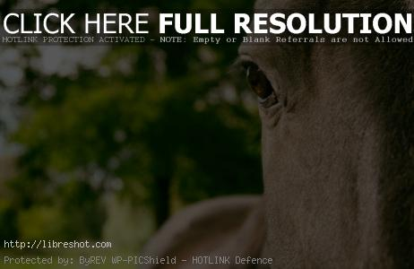Free image of Horse Eye