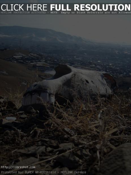 Horse Skull In Mongolia