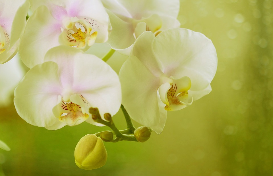 flower, exotic, exotic flower