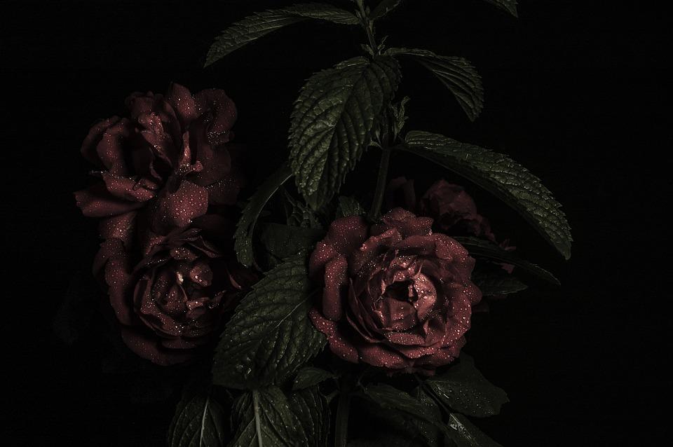 rose, bouquet, flower