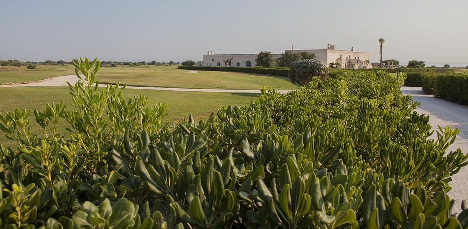 golf, plants, prato