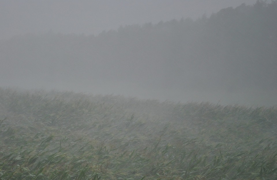 thunderstorm, downpour, forward