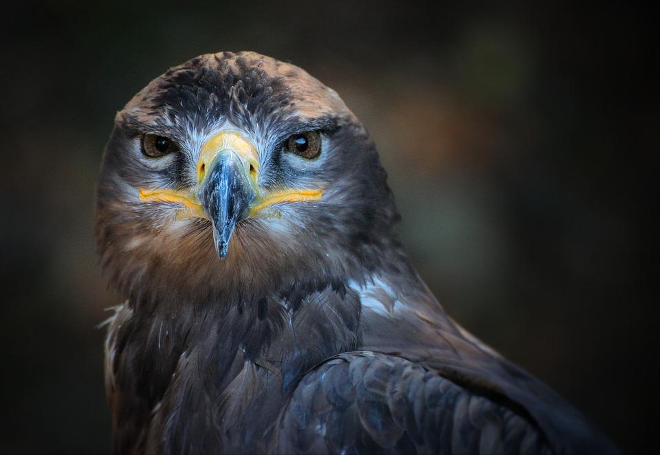 portrait, bird, nature