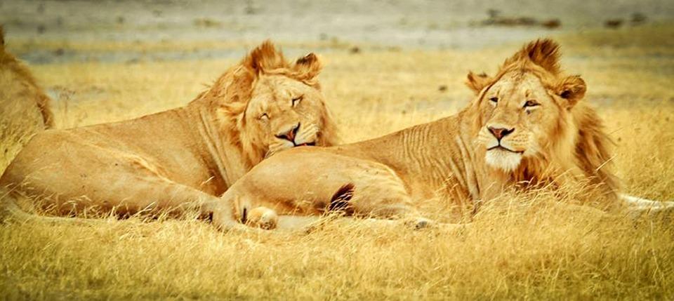 tanzania, serengeti national park, safari