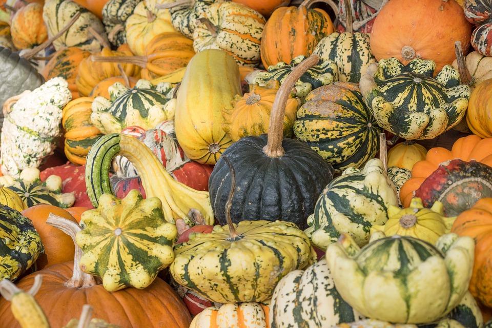 pumpkins, autumn, orange