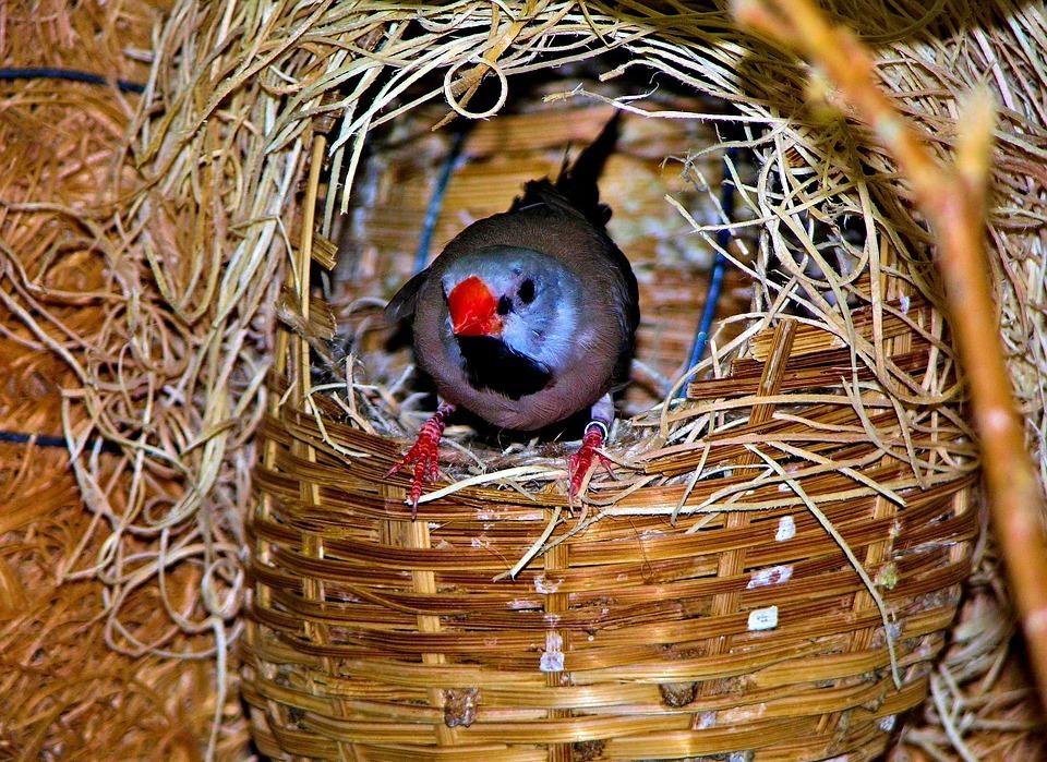 birds, colorful, blue