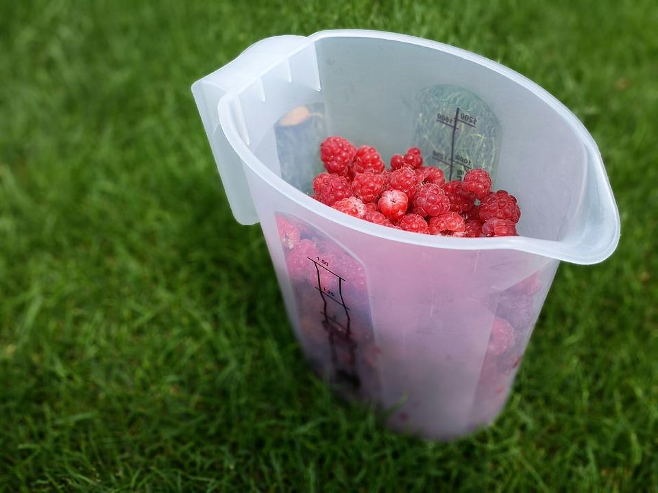 picnic, fruits, raspberries