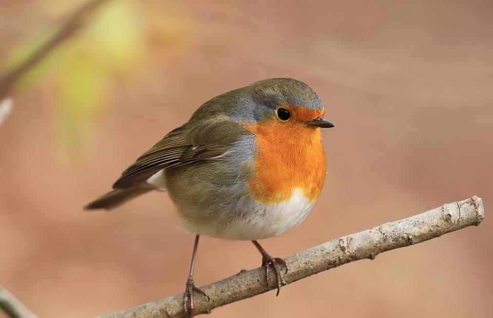 colorful, singing, bird