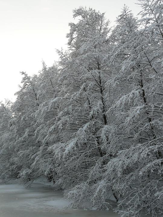 snowy, winter, wintry
