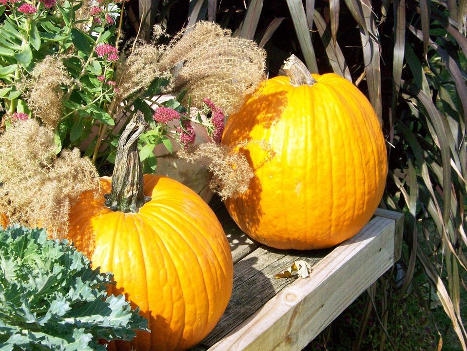 autumn, pumpkins, halloween