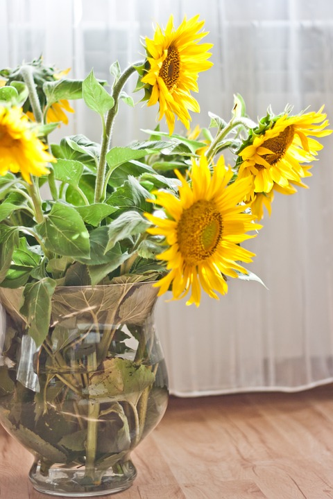 sunflower, vase, yellow