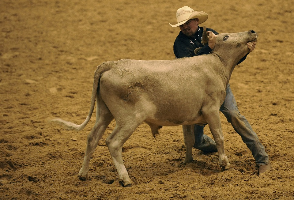 rodeo, steer, wrestling