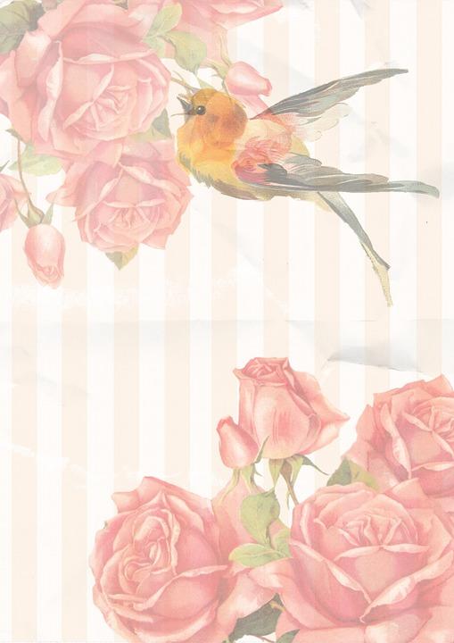 vintage, rose, bird