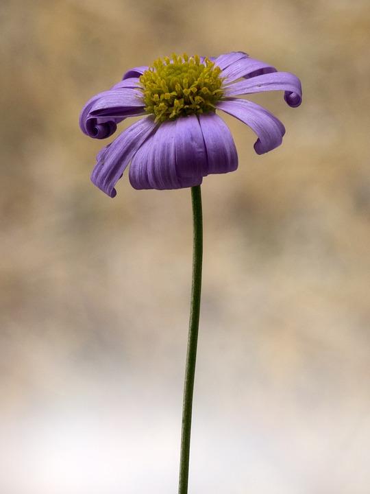 flower, small, macro