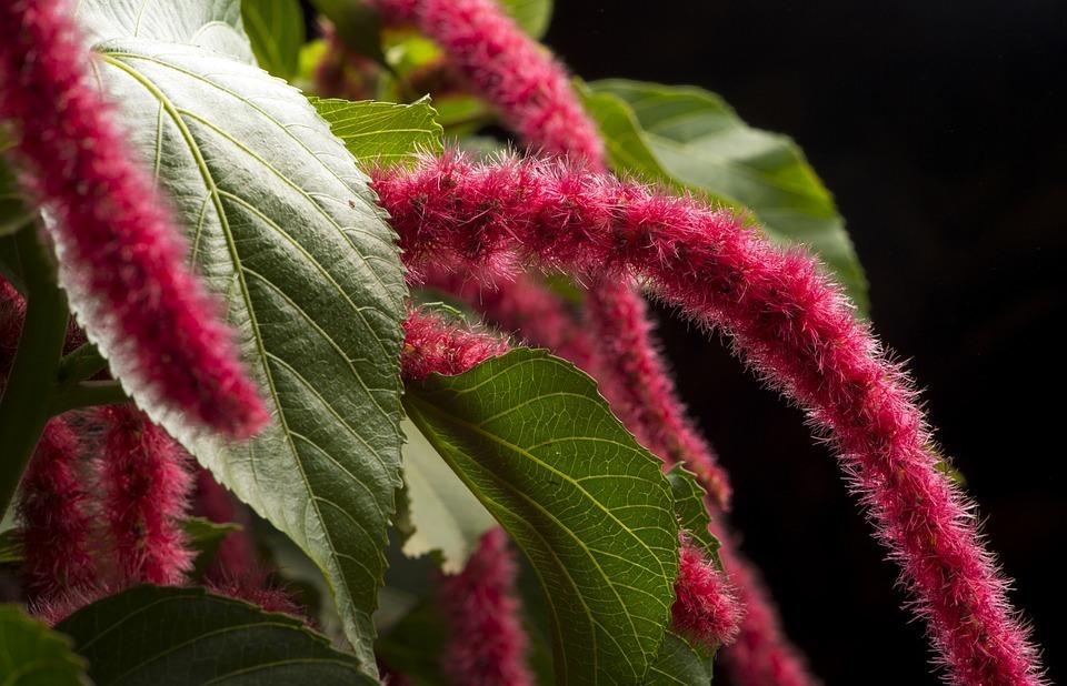 exotic, flower, hairy