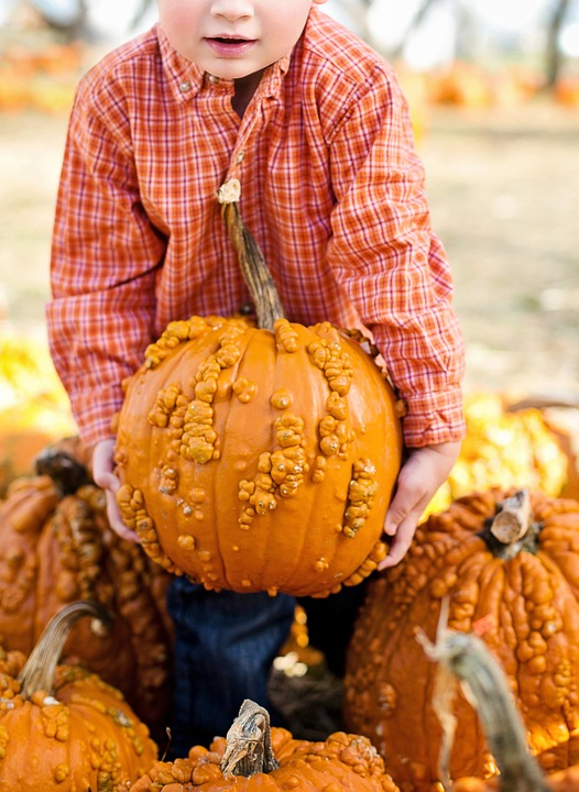 pumpkins, halloween, autumn