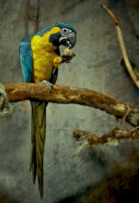 parrot, bird, colorful