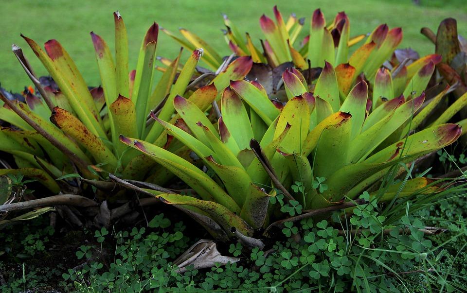 genus, exotic plant, exotic botany