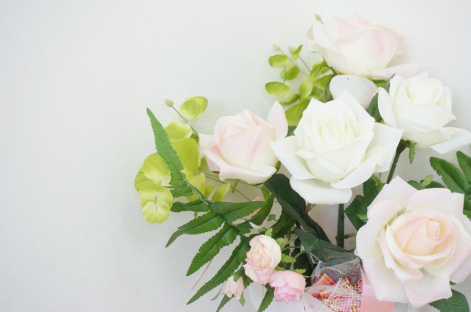 rose, rosaceae, pink