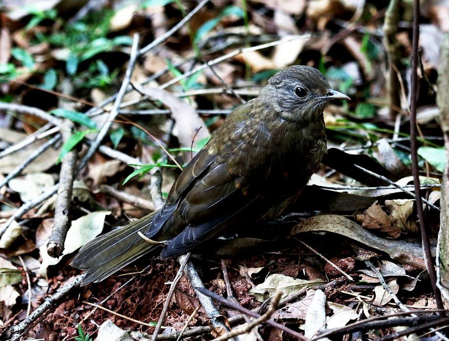 bird, tropical, on the floor