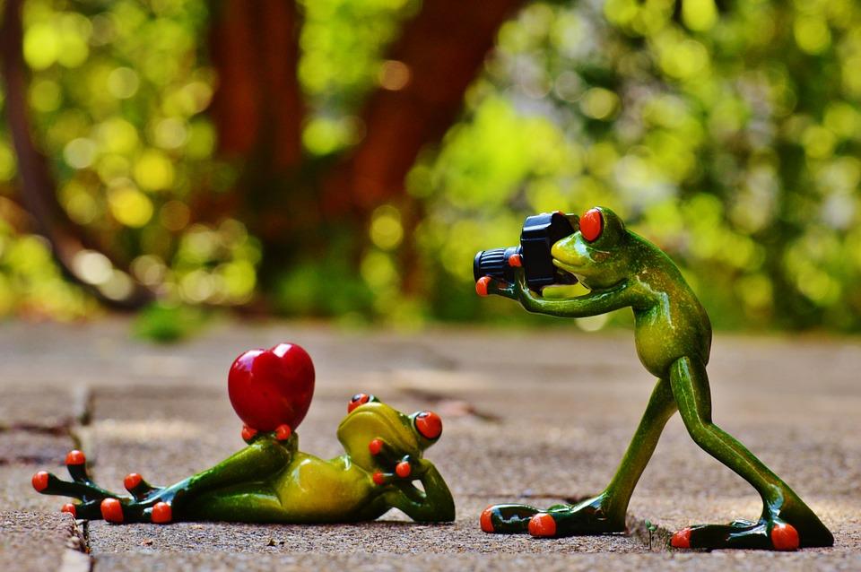 frogs, love, valentine\'s day