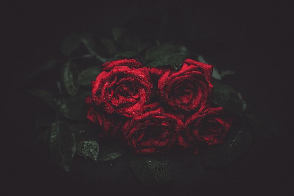 roses, flowers, night
