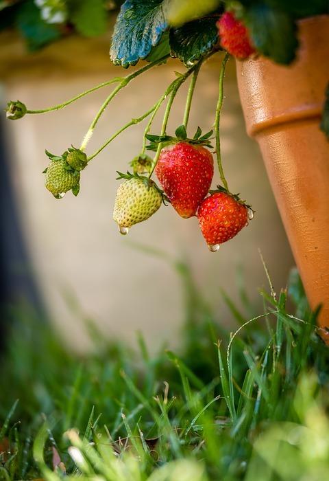 health, plant, garden
