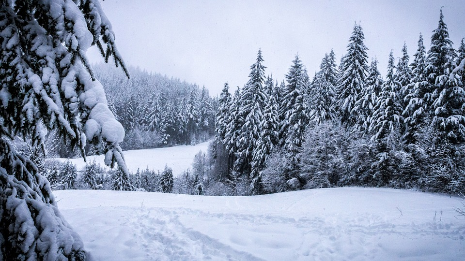winter, forest, snowy