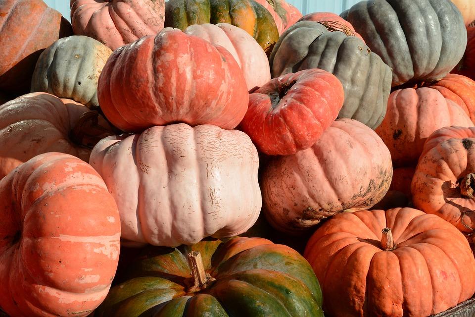 pumpkins, patch, orange
