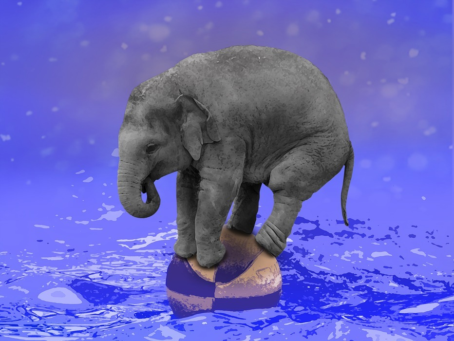 elephant, ball, baby