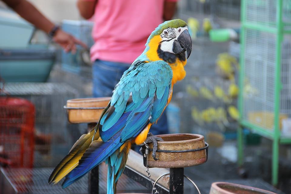 parrot, bird, exotic