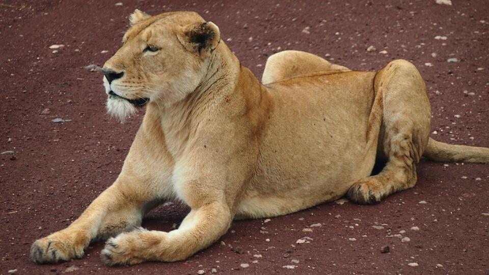 safari, africa, tanzania
