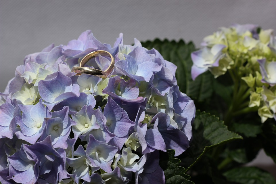 hydrangea, rings, gold ring