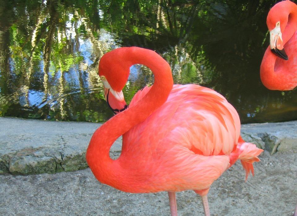flamingo, bird, tropical
