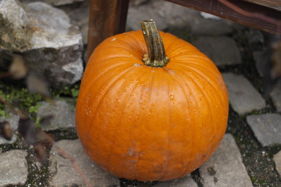 pumpkin, autumn, halloween