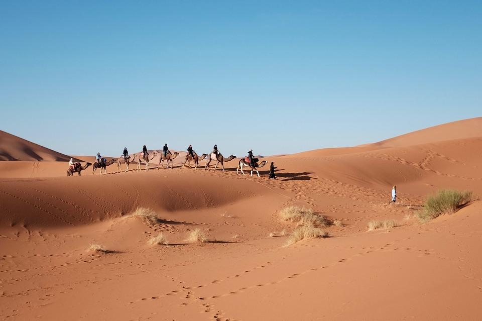 desert, camels, travel