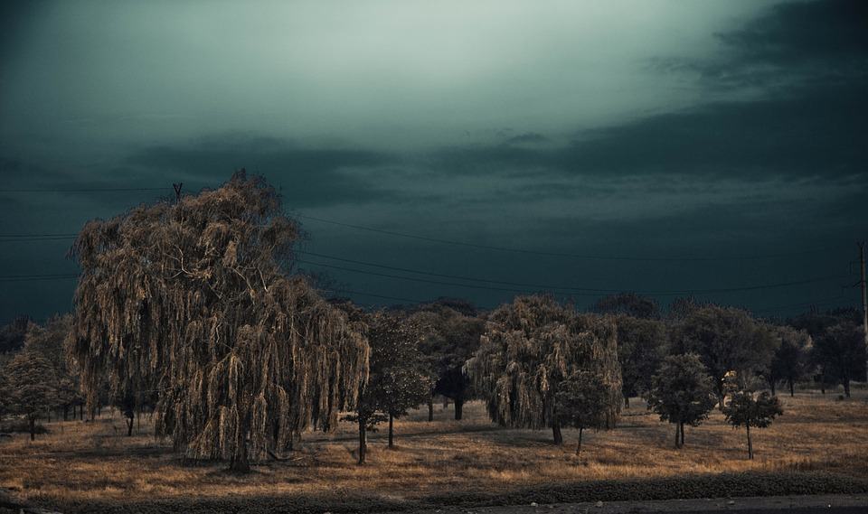 thunderstorm, beach, willow