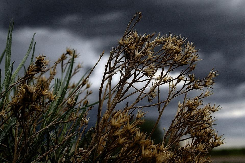 thunderstorm, plants, flowers