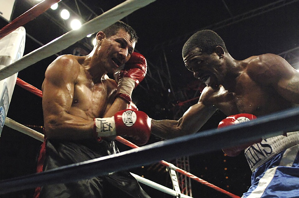 boxer, boxing, corner