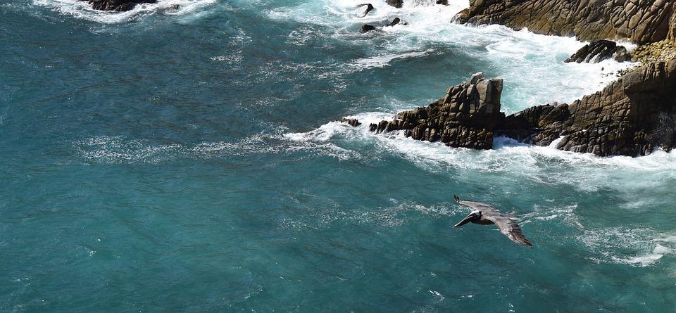 bird, cliffs, flying