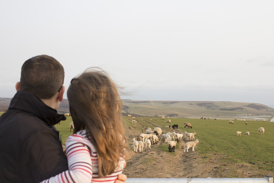 family, father and daughter, sheep