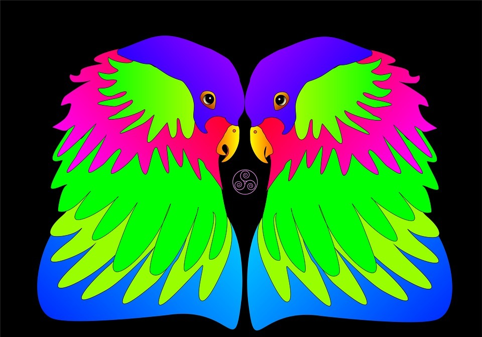 birds, colorful, love
